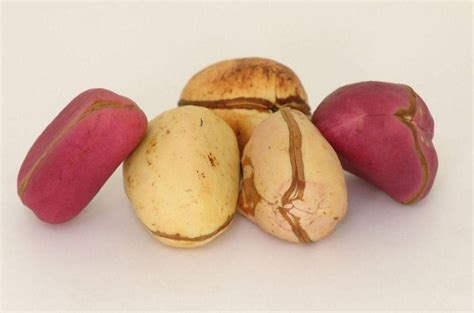 Interesting Facts About Kolanuts In Igboland • Connect Nigeria