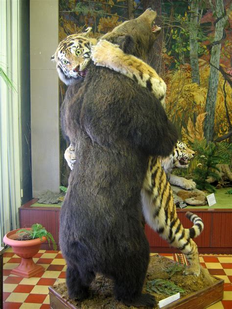 File:Tiger and bear, Arsenev Regional History Museum