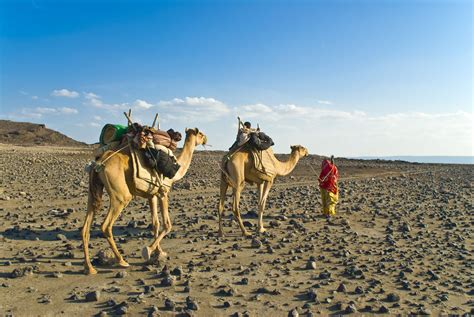 Djibouti Travel Guide: Essential Facts and Information
