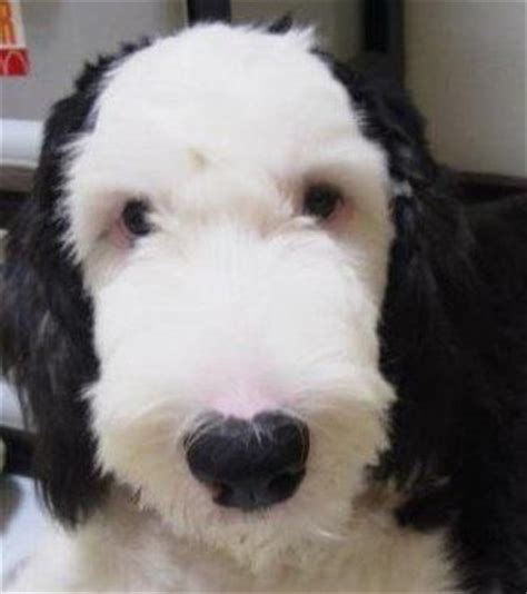 looks like Snoopy, for real!!!! | Cute animals, Cute dogs