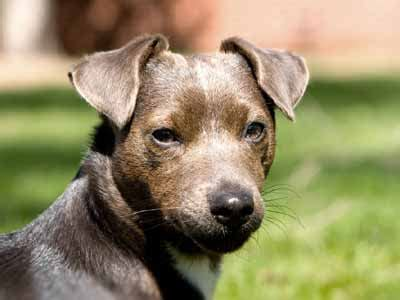 Patterdale - Information, Characteristics, Facts, Names